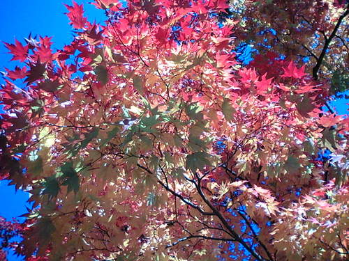 宏楽園の紅葉3
