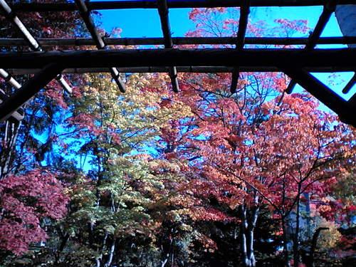 宏楽園の紅葉2